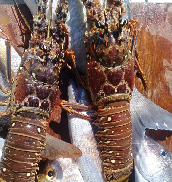 Belize-Guide-Co-lobster-catch