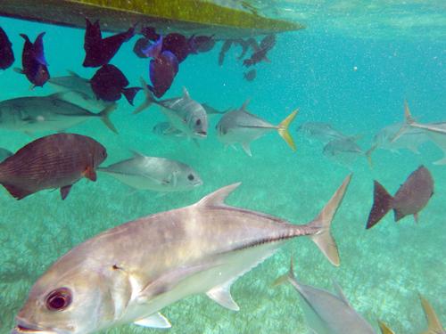 Belize-Guide-Co-snorkel-boat-bottom