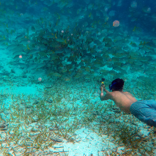 Belize-Guide-Co-snorkel-fish-school